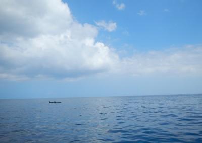 Kauai, Dolphin bay